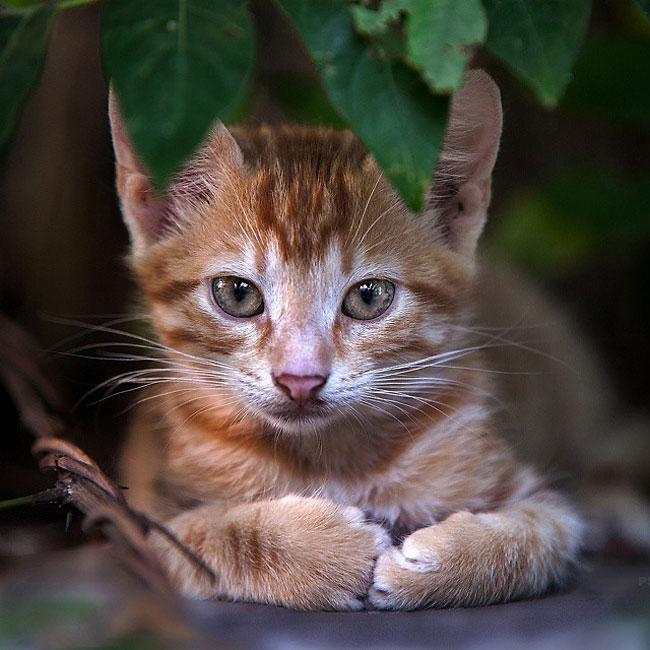 Sergey Polyushko gato