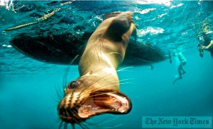 Foto tomada por Kike Calvo en las Galápagos