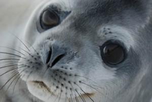 Fotografía tomada por Gurruchaga en La Antártida