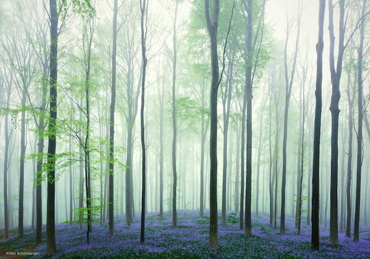 bosque con luz mágica