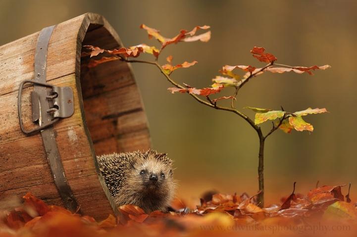 autumn07