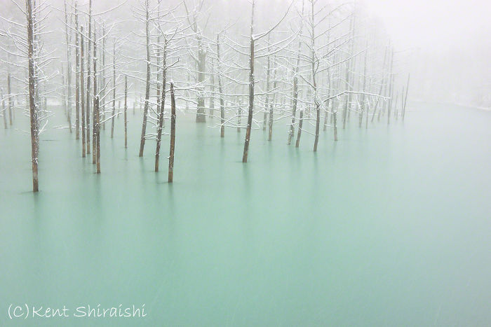 Green-Frozen-Pond-FB-1600px__700
