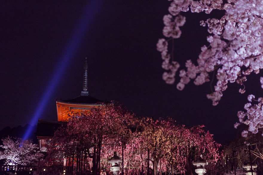 i-traveled-to-japan-and-photographed-the-cherry-blossoms-3__880