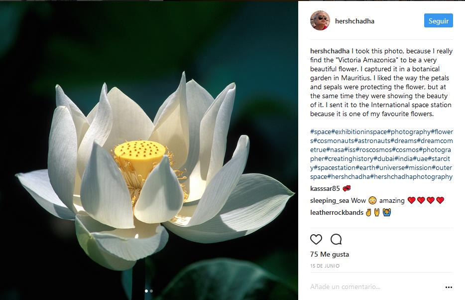 hershchadha-instagram-victoria-amazonica