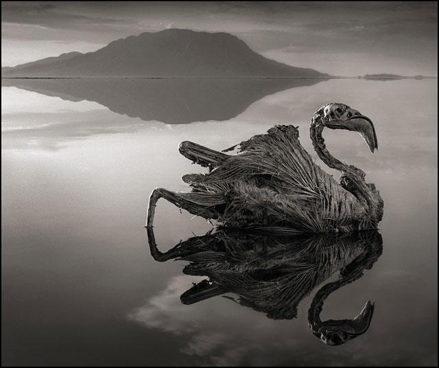 fotos lago natron