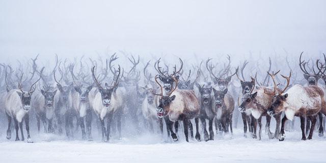 fotos animales salvajes