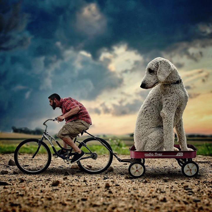 fotos perros gigantes
