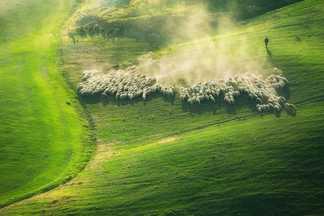 fotos ovejas en Italia