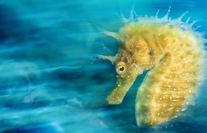fotos mundo submarino