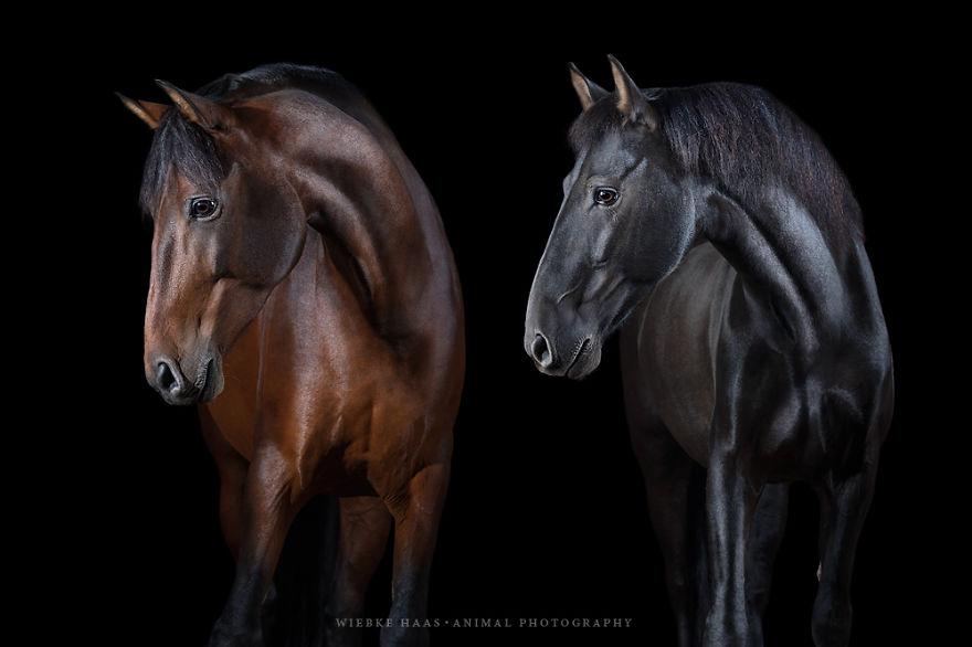 fotos caballos