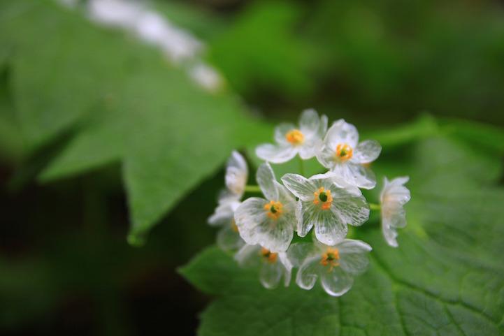 fotos flores esqueleto
