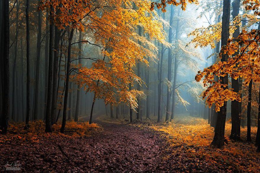 fotos bosques de ensueño