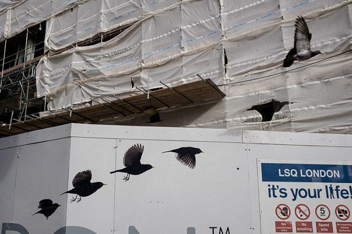 palomas y agujeros