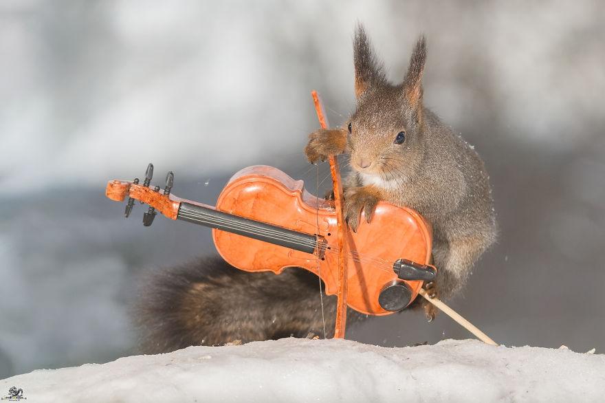 fotos ardillas tocando instrumentos