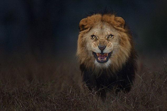 fotos leon