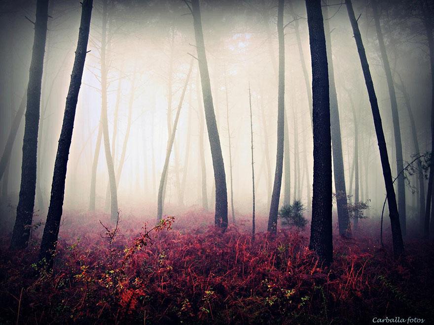 fotos de bosques españoles