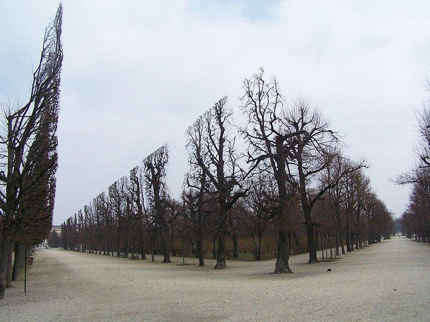árboles parque de schonbrunn