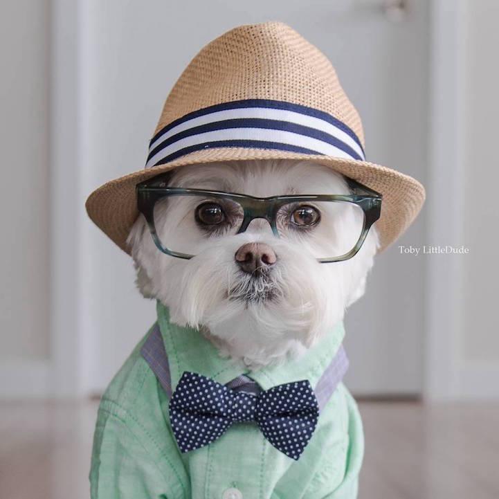 fotos perros hipster