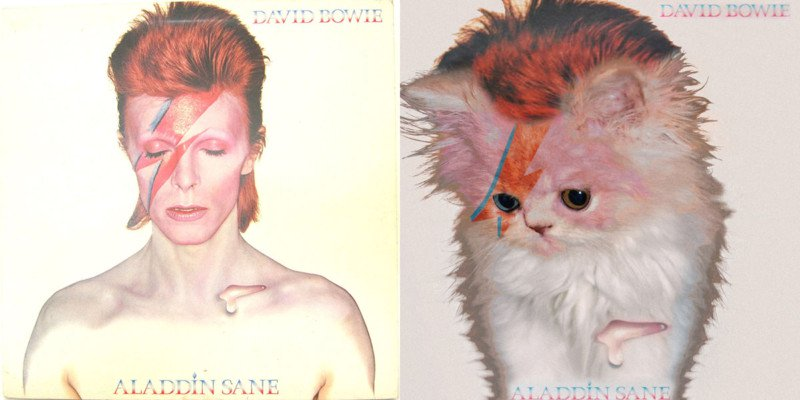 Bowie cat cover