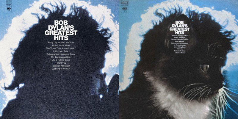 Dylan cat cover