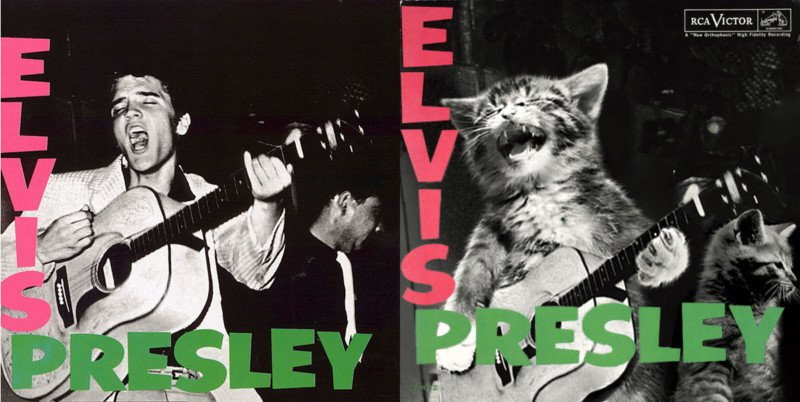 Elvis cat cover