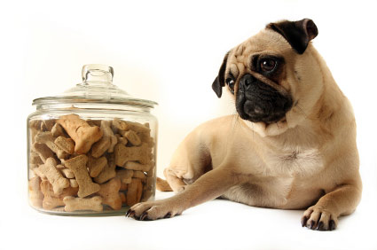 El truco de la galleta en las fotos de mascotas