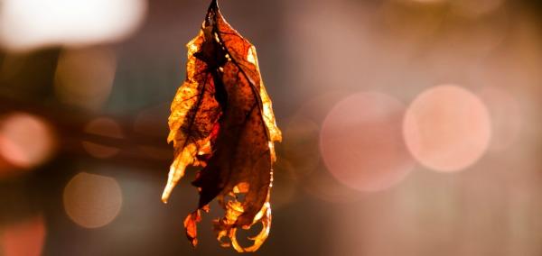 Fotografiar otoño
