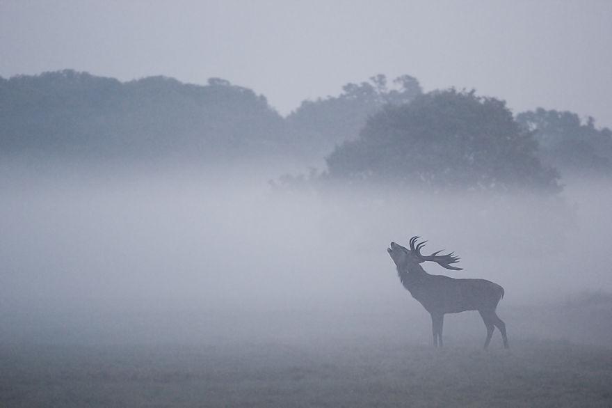 fotografías ciervos centro londres