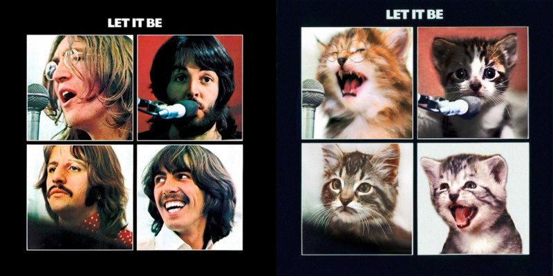 Beatles cat cover