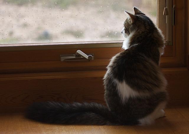 Foto lluvia gato