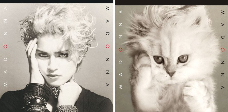 Madonna cat cover