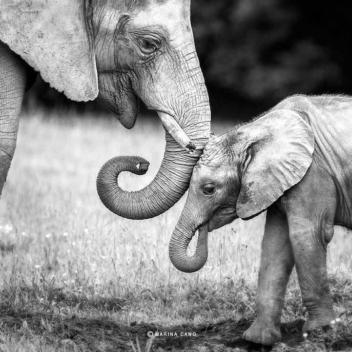 fotos de animales en áfrica