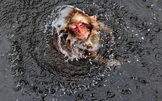 fotos monos de nieve por jasper doest