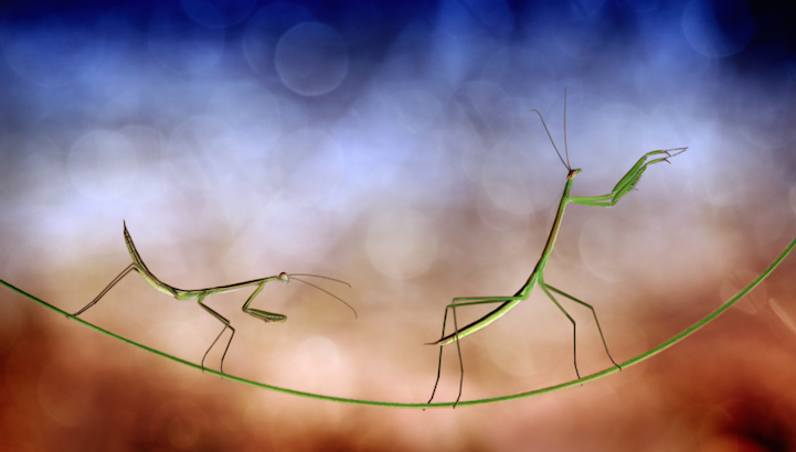 fotos macro insectos