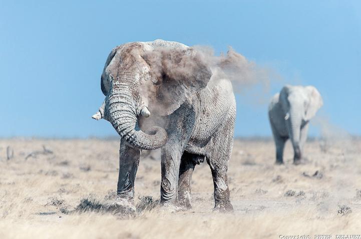 fotos elefantes