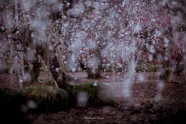 fotos flores japón