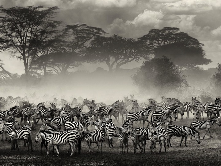 fotos de animales en grupo