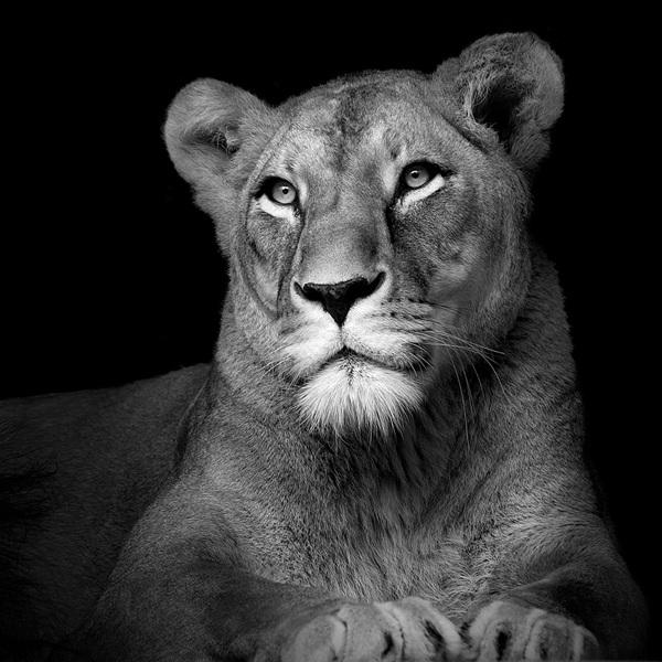 retratos de animales en cautividad
