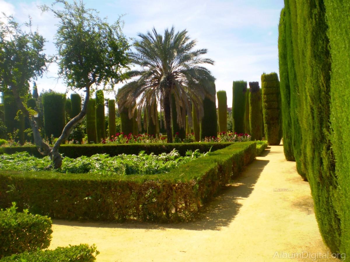 Arbustos del jardin alcazar de cordoba for Arbustos de jardin