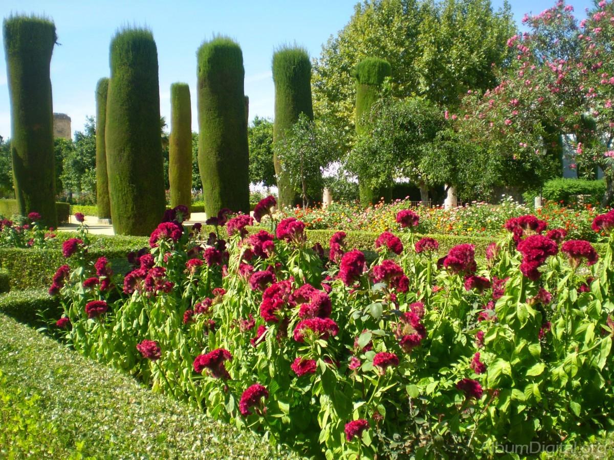 Arbustos y flores for Plantas y arbustos de exterior