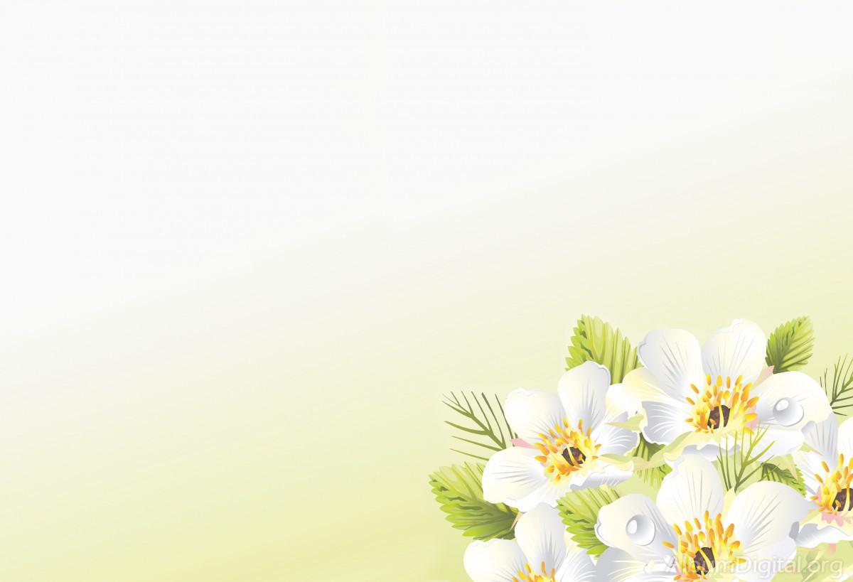 Fotos de flores blancas 38