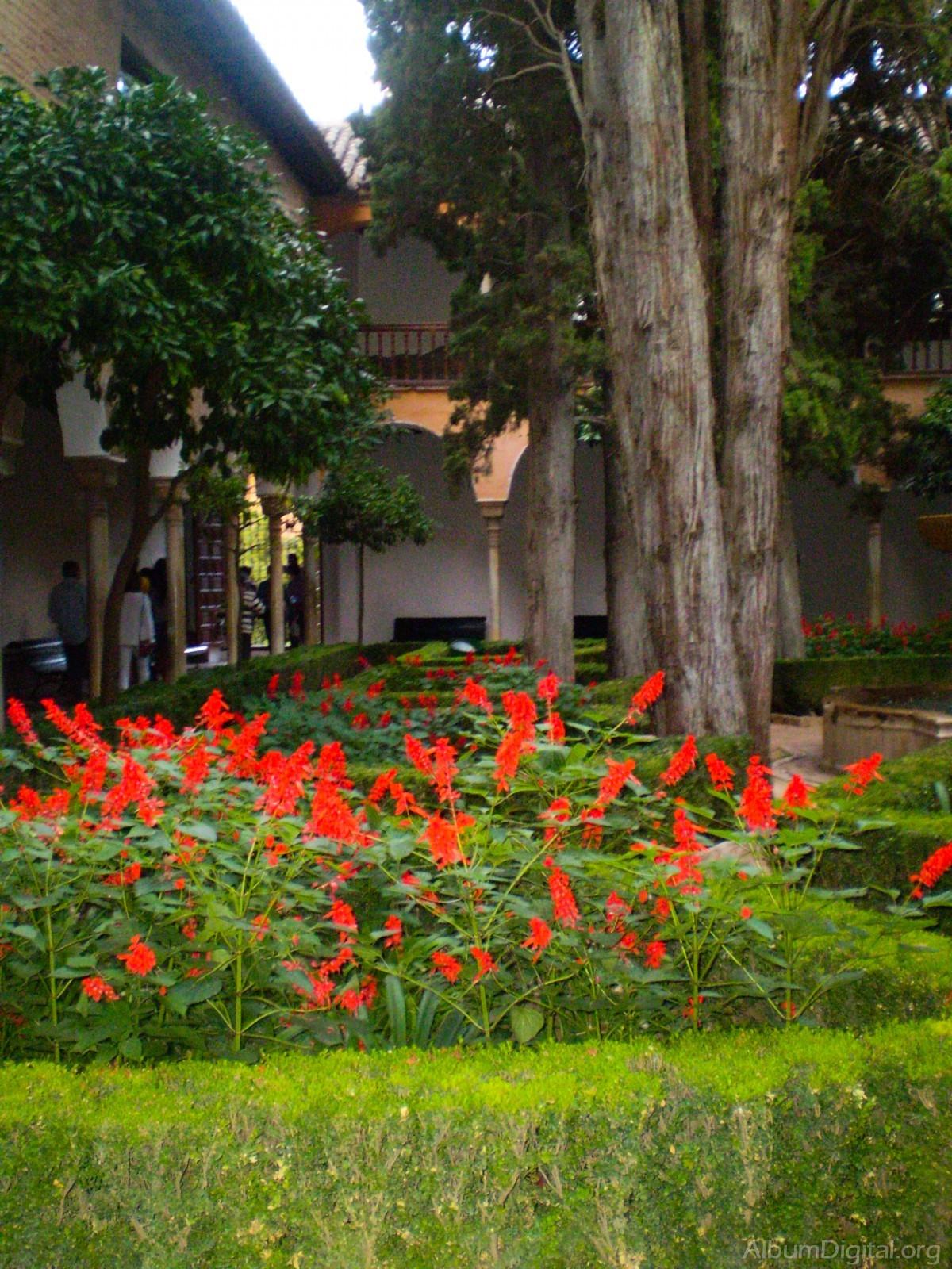 Jardin de flores rojas - Plantas de jardin fotos ...