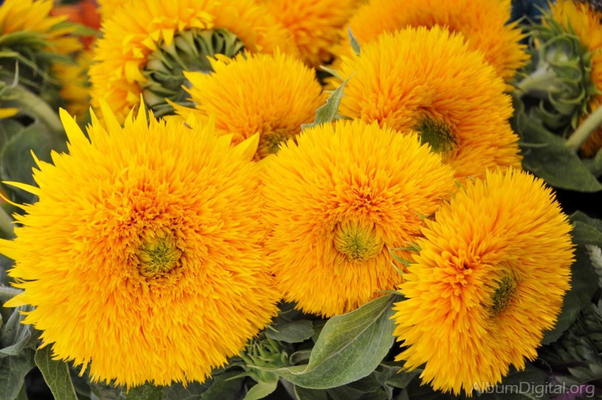 Manojo De Flores Amarillas